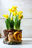 Bunch of fresh daffodils. Royalty Free Stock Photos