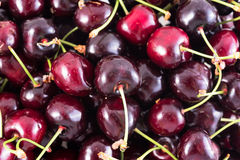 Bunch of fresh dark red cherries  Royalty Free Stock Images