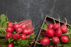Bunch fresh diet radish, rustic background. Copy space for text.  royalty free stock photo