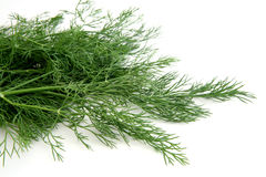 Bunch of fresh dill Royalty Free Stock Photography