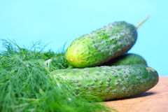 Bunch fresh dill and cucumbers on wooden table Royalty Free Stock Photos