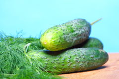 Bunch fresh dill and cucumbers on wooden table Stock Image