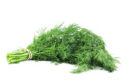 Bunch fresh dill herb. Royalty Free Stock Photo