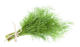 Bunch fresh dill Stock Photos