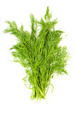 Bunch fresh dill herb Royalty Free Stock Photos