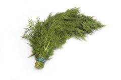Bunch of fresh dill herbs Royalty Free Stock Photo