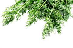 Bunch of fresh dill Isolated on white macro Royalty Free Stock Images