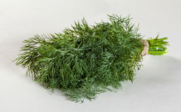 Bunch of a fresh dill Royalty Free Stock Image