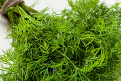 Bunch of a fresh dill Royalty Free Stock Images