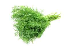 Bunch of fresh dill. On white background Stock Image