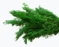 A bunch of fresh dill on white. Isolated. Stock Images