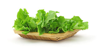 Bunch Fresh Escarole Royalty Free Stock Photo