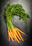 Bunch of fresh farm carrots Stock Images