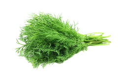 A bunch of fresh fennel. On a white background Royalty Free Stock Photos