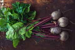 Bunch of fresh garden beetroot over grunge rusty metal backdrop Royalty Free Stock Image