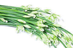 Bunch of fresh Garlic chives flowers Royalty Free Stock Photography