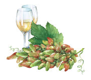 Bunch of fresh grapes and glasses of white wine. vector illustration