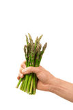 Bunch of fresh green asparagus in hand Royalty Free Stock Photography