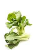 Bunch of fresh green baby bok choy, on white Stock Image