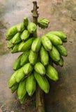 Bunch of fresh green bananas. On the floor Stock Photo