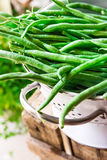 Bunch of fresh green beans in white metal colander on weathered wood garden box, herbs, clean eating Stock Image