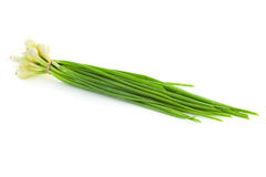 Bunch of fresh green Chives  /  isolated Stock Photo