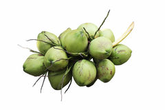 Bunch of fresh green Coconuts Stock Images