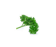 Bunch of fresh green curly parsley on white background Royalty Free Stock Photography
