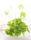 Bunch of fresh green curly parsley on white background. Selecriv Royalty Free Stock Images
