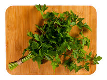 Bunch of fresh green curly parsley Stock Photography
