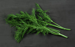 Bunch fresh, green dill herb on a black background Royalty Free Stock Photo