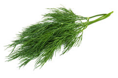 Bunch of fresh green dill isolated on white. Background Royalty Free Stock Images