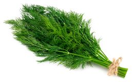 Bunch fresh green dill isolated on white background royalty free stock photo