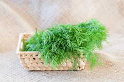 Bunch of fresh green dill Royalty Free Stock Photo