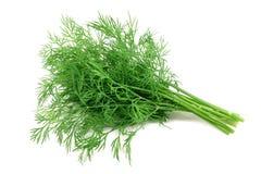 Bunch fresh, green dill Royalty Free Stock Photo