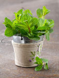 Bunch of fresh green fragrant mint Royalty Free Stock Image