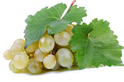 Bunch of fresh green grapes Stock Photography