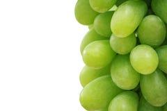 Bunch of fresh green grapes in vineyard Stock Photos