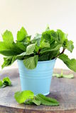 Bunch of fresh green mint Stock Photos