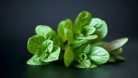 Bunch of fresh green mint on black background stock footage