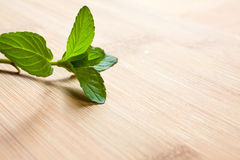 Bunch of fresh green mint Royalty Free Stock Photos