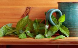Bunch of fresh green mint leaf . Stock Images