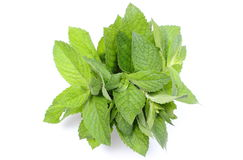 Bunch of fresh green mint on white background Royalty Free Stock Photography