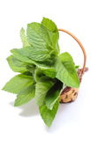 Bunch of fresh green mint in wicker basket on white background Stock Photo