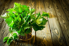 Bunch of fresh green nettle on the wooden background Stock Photo