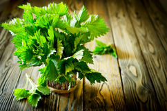 Bunch of fresh green nettle on the wooden background. Bunch of fresh green nettle on wooden background. Copy space. Selective Focus Stock Photo