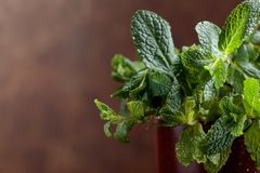 Bunch of fresh green organic mint . Royalty Free Stock Image