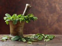 Bunch of fresh green organic mint in mortar. Stock Photo