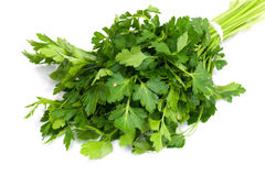 Bunch of Fresh green parsley Royalty Free Stock Images