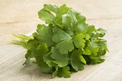 Bunch of fresh green parsley. Leaves Royalty Free Stock Photo